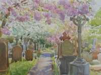 Picture of the Week: <p> Pink and white blossoms stir in the breeze above gravestones in Ecclesall Church Cemetery, Summer is coming.</p>